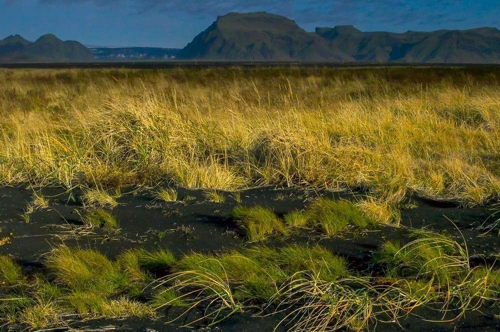 Grasslands Resolve 4