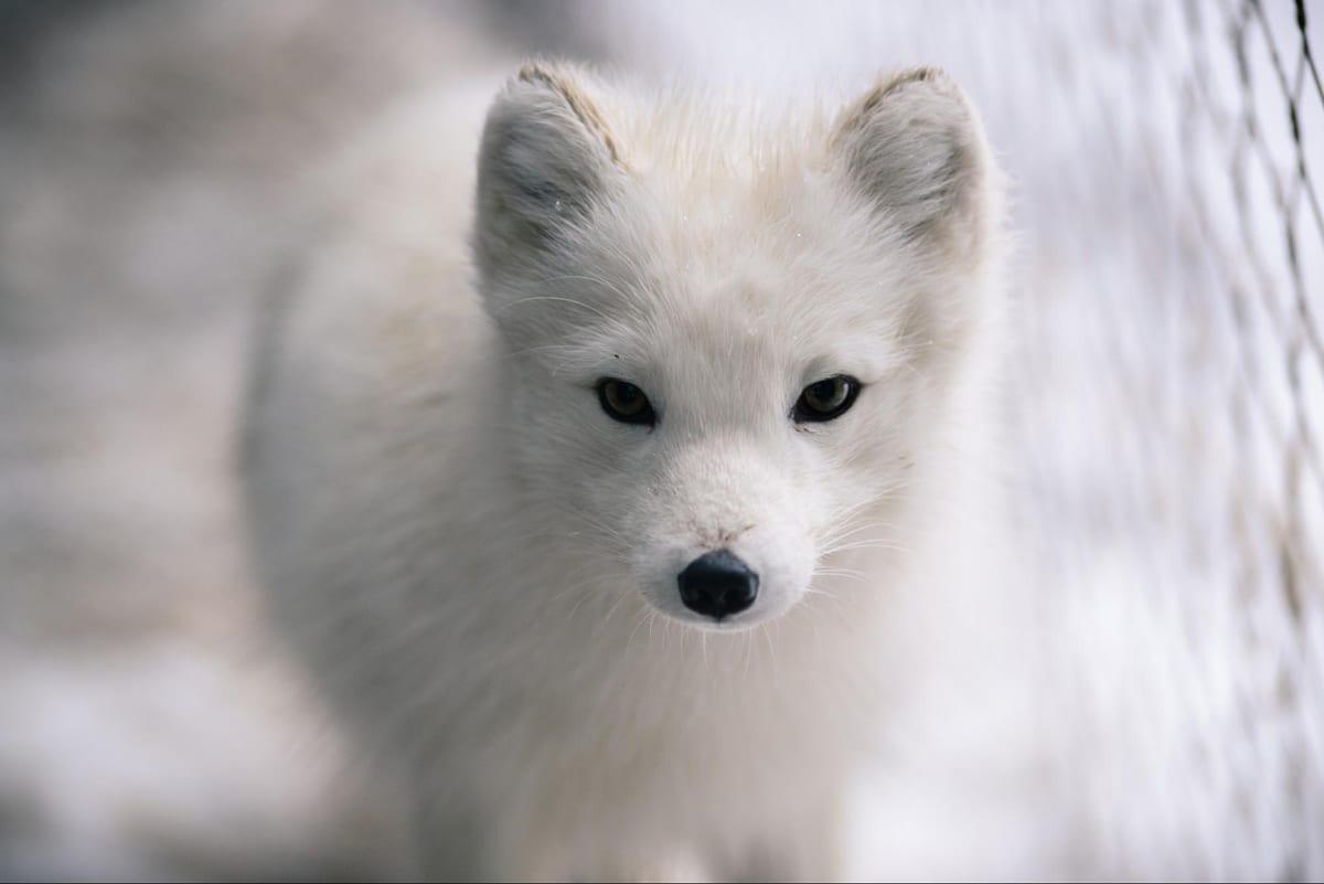Arctic Resolve 5
